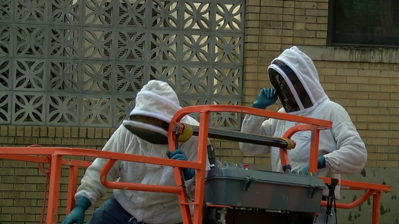 Massive beehive removed from National Civil Rights Museum