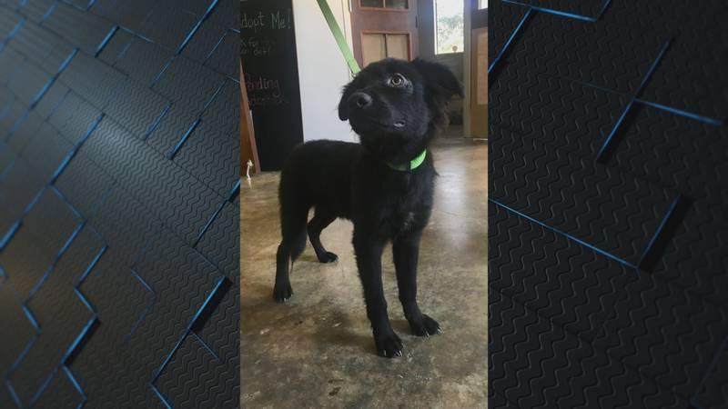 Dog awaits adoption at NEAHS (Source: KAIT)