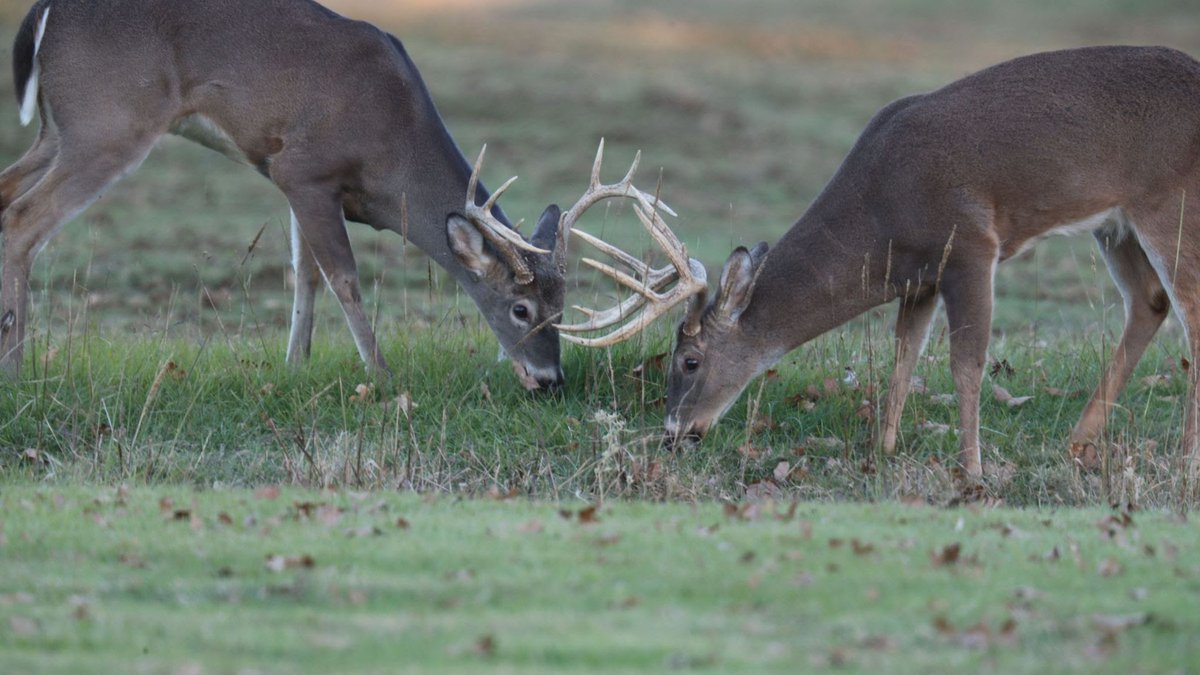 The report, produced each year by the AGFC deer program coordinators, includes data collected...