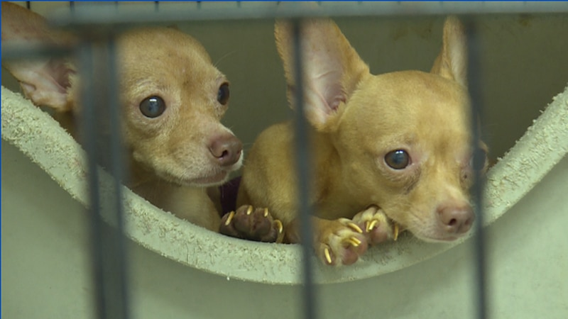 Dogs have been dumped at various locations around Branson and animal control is being stretched...