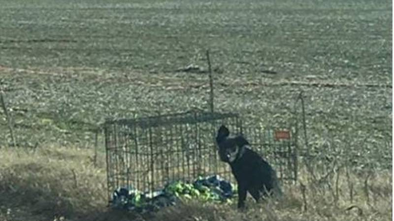 Anyone with information is asked to call the Kennett Humane Department. (Source: Cpl. Alan...