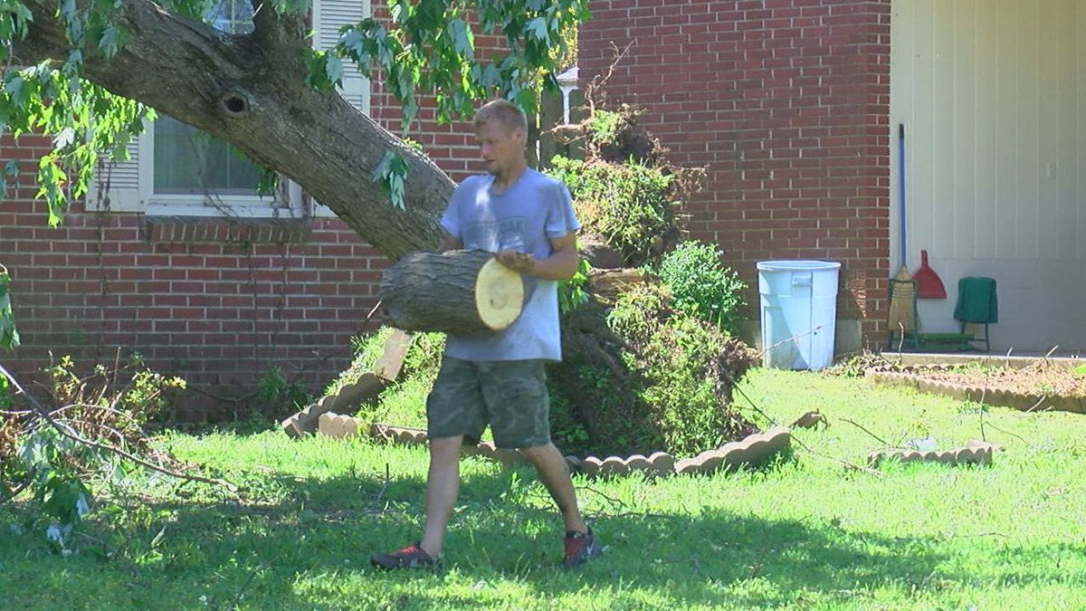 Community working together to remove trees