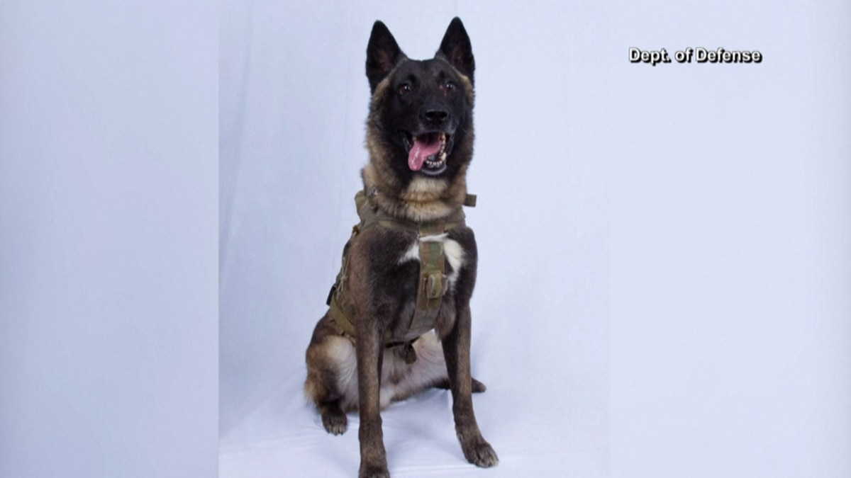 President Trump declassified the picture of a military dog who was injured during a raid that...
