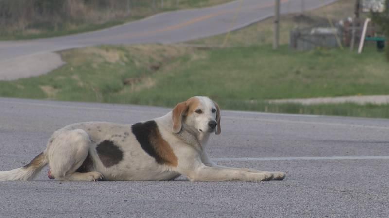 "Ironton, Missouri dog makes name for himself as the ""Panhandling Hound"""