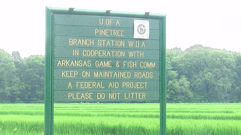 The University of Arkansas Division of Agriculture is continuing to pursue the Pine Tree...