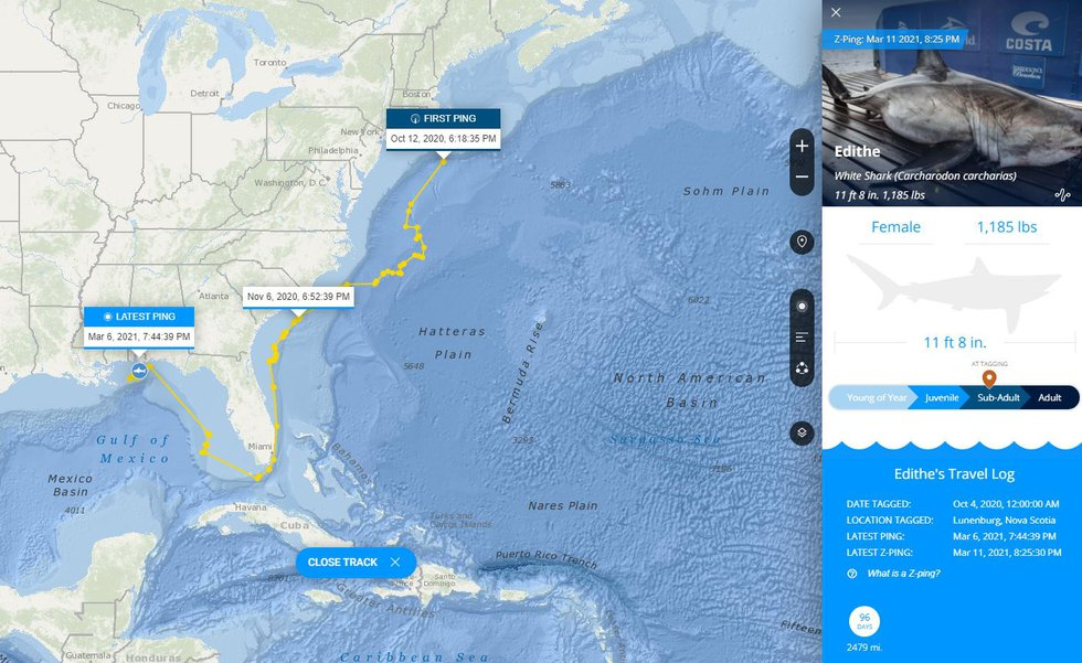 Edithe was originally pinged off the coast of New England before making her way to the Gulf of...
