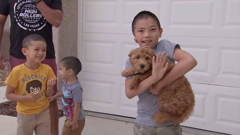Maxson Hess, 8, (right) and his new puppy share the condition microtia, which means their ears...
