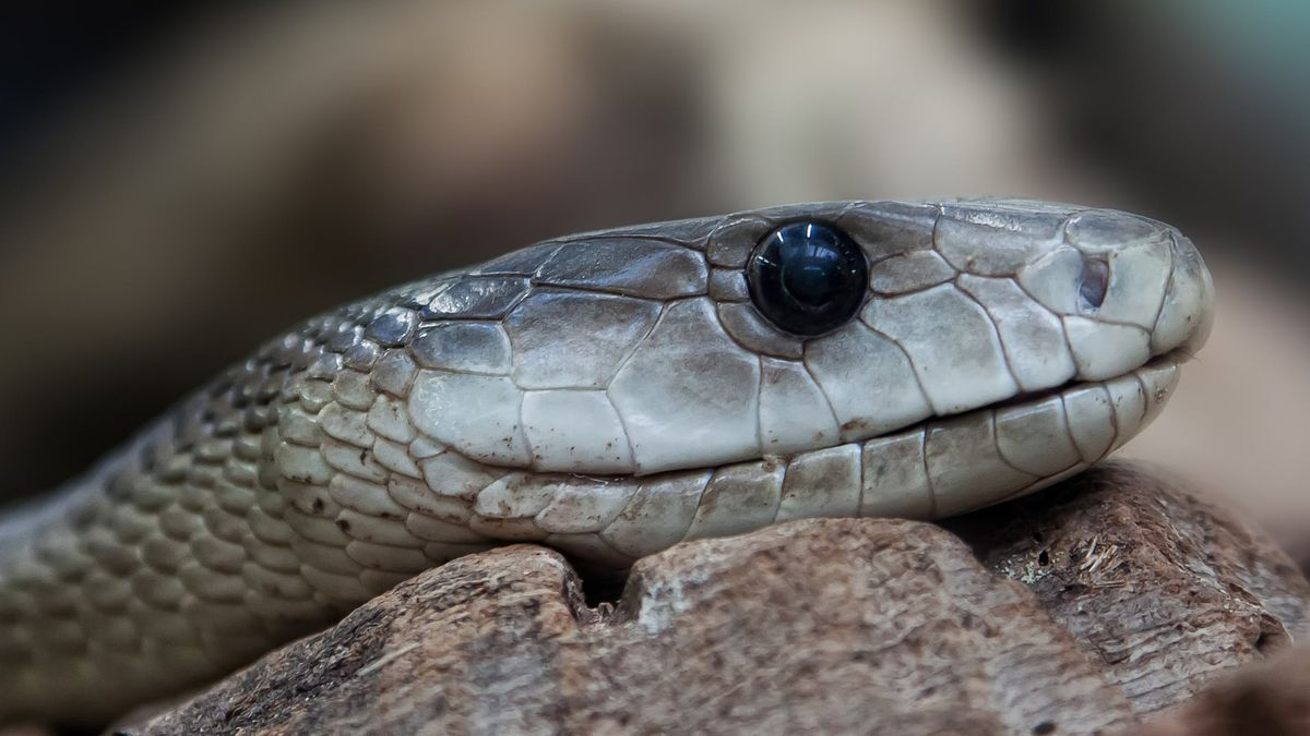 A snake was blamed for all the commotion (Source: Pexels)