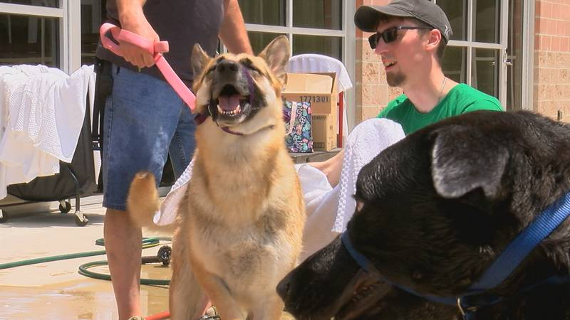 Over 30 dogs came out to get their bath on Saturday.