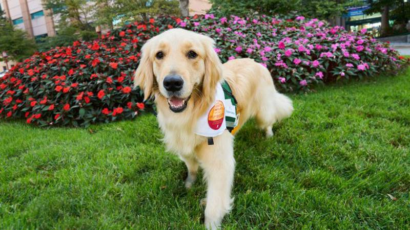 St. Jude adds new facility dog to support employees
