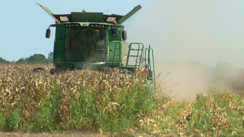 Farmers feel the impact of China tariff war