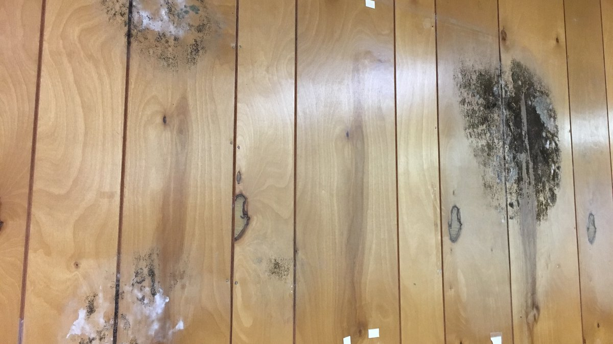 Mold in a classroom (Source: CCSD)