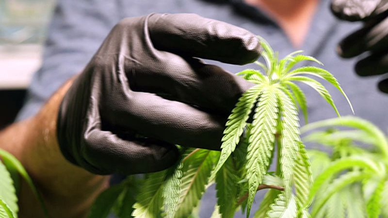 Since the first medical marijuana dispensary opened two years ago, the state of Arkansas has...