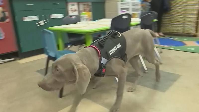 Student trains dog for veteran