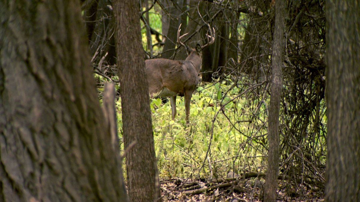 That means whole deer carcasses cannot leave CWD zones until negative tests are confirmed.
